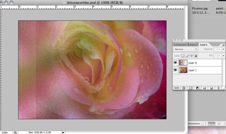 Rose photo moved to right