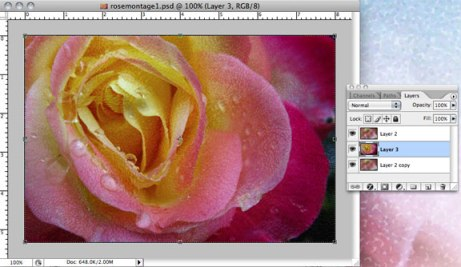 Rose photo brought into background layers document
