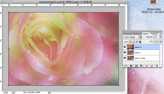 Rose layer with Color Dodge Blend Mode applied