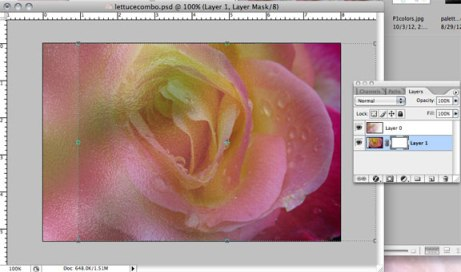 Rose layer with mask