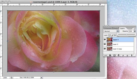 Rose layer moved to top; opacity changed to 50%