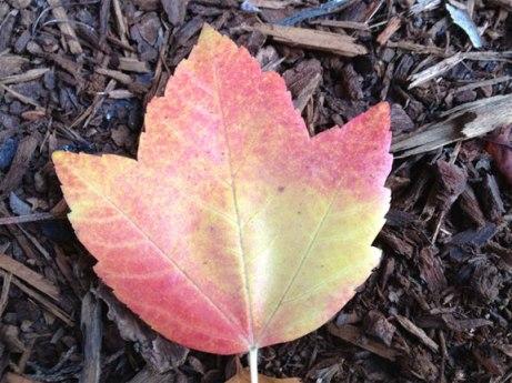 Leaf photo (original)
