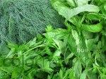 Fresh Herbs photo