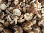 Mushroom photo set of 3