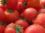 Market Tomatoes 3