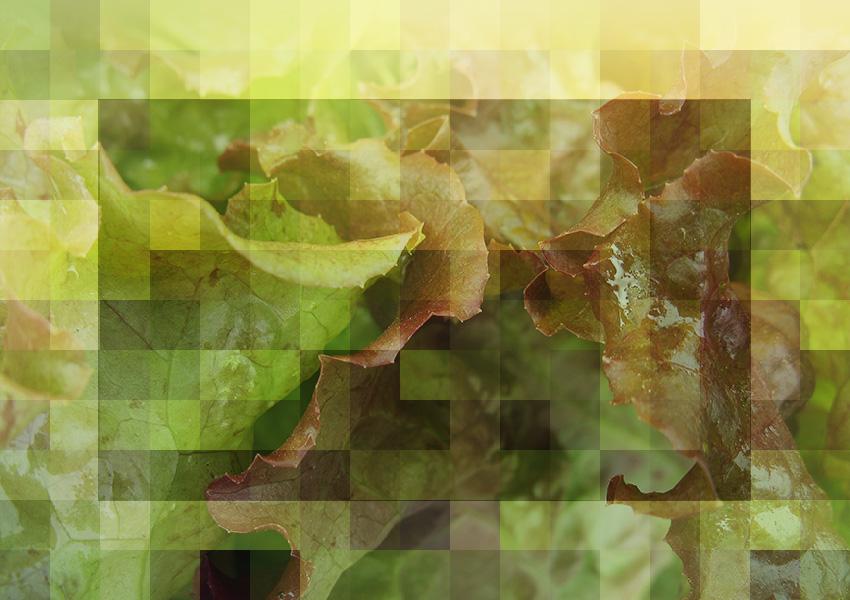 Mosaic photo montage